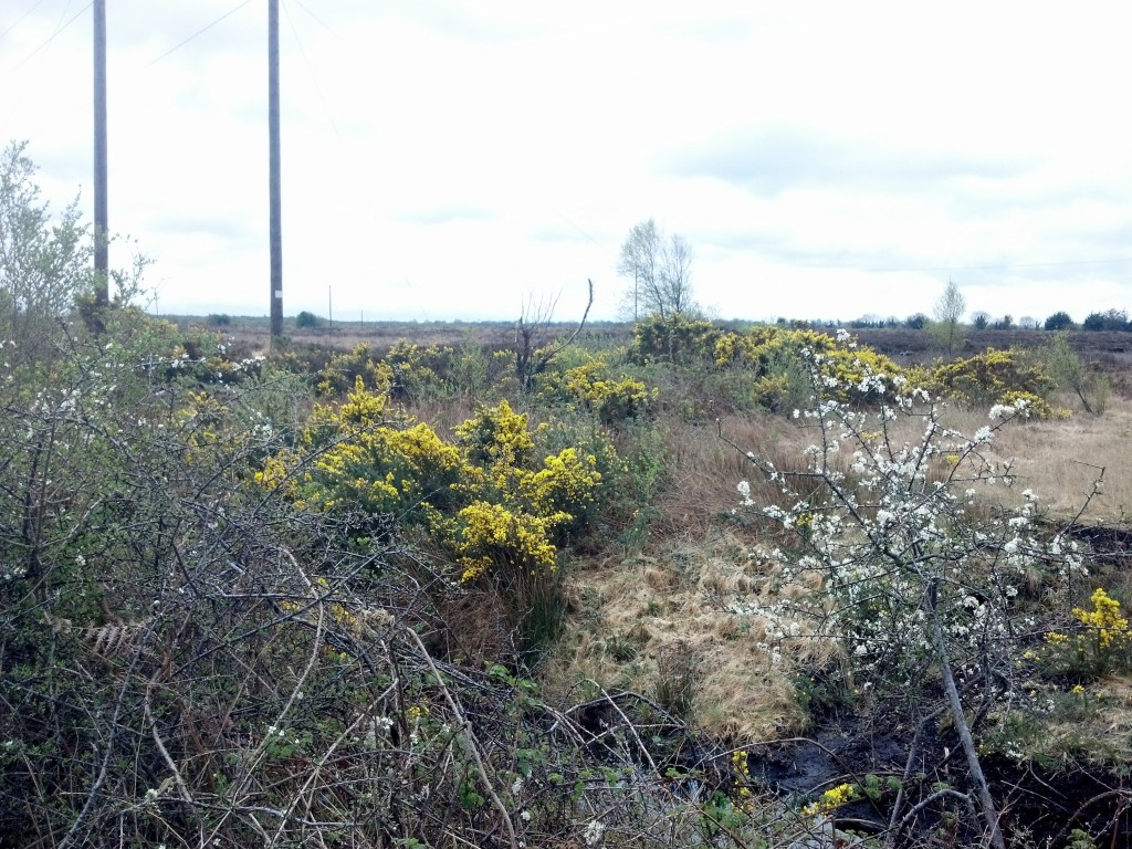 The gorse catches fire, making it easier to harvest the peat underneath