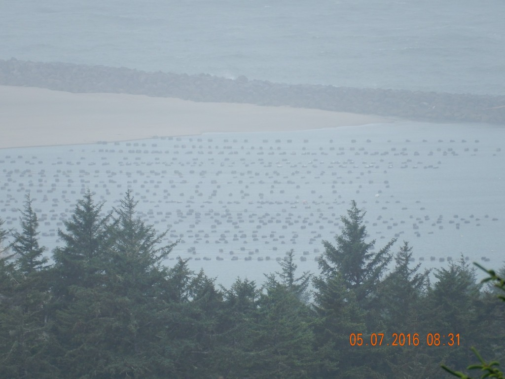Foggy Day in Winchester Bay - oyster and clam cultivation