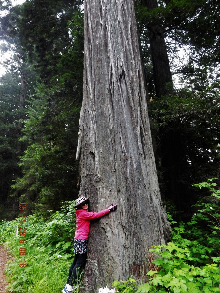 Hugging the Redwood
