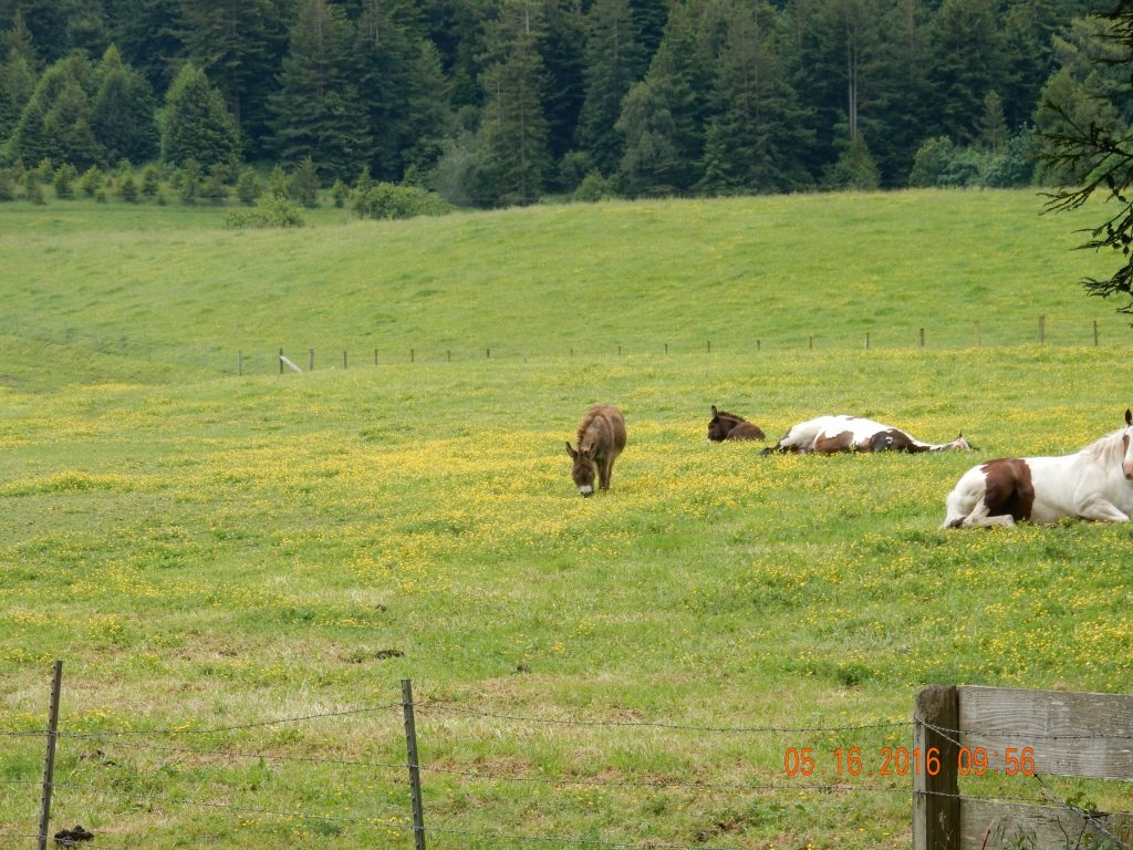 Not cows, donkeys and lazy hores