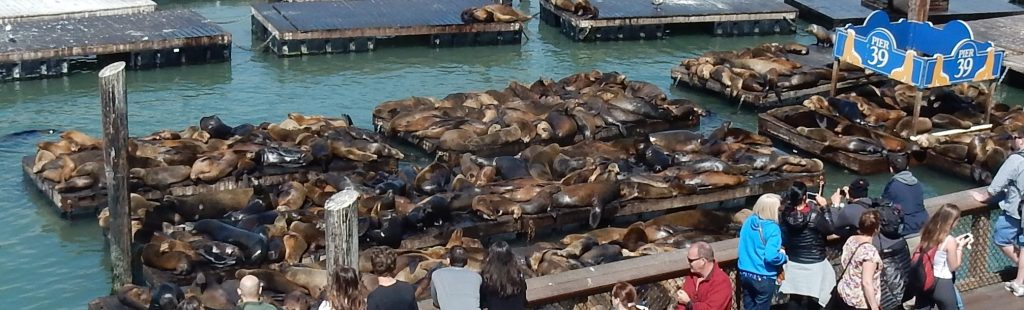 a pile of sea lions