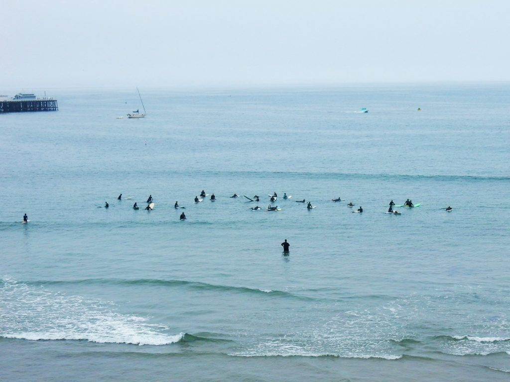 Not birds, but surfing school
