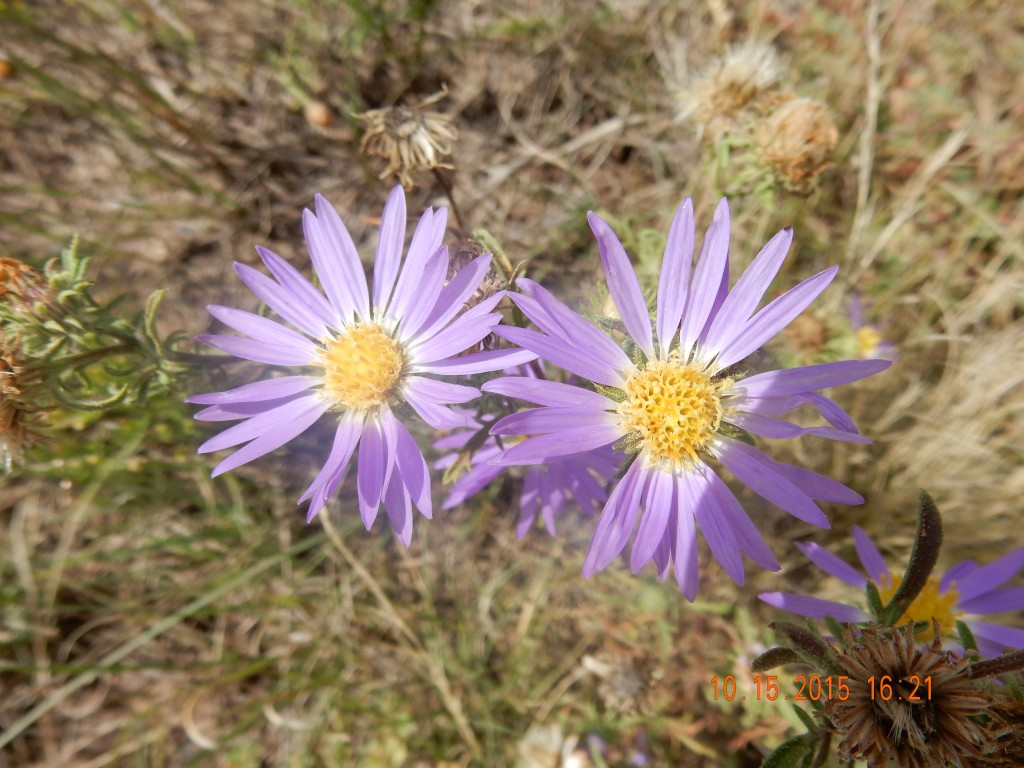 Flowers at our campsite