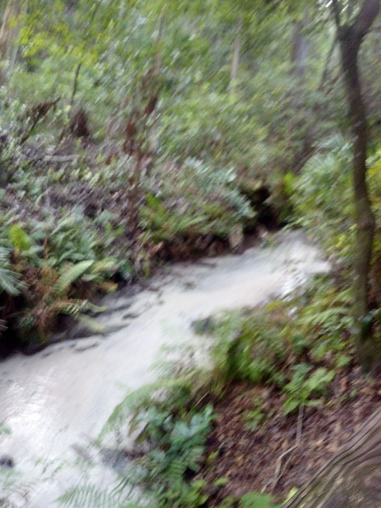 Spring-fed stream in the ravine