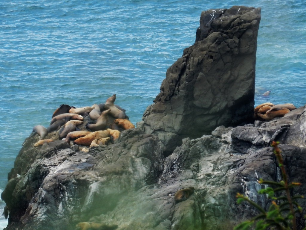 Sea lions snoozing