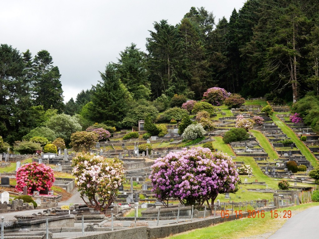 View from the entrance to the cemetery