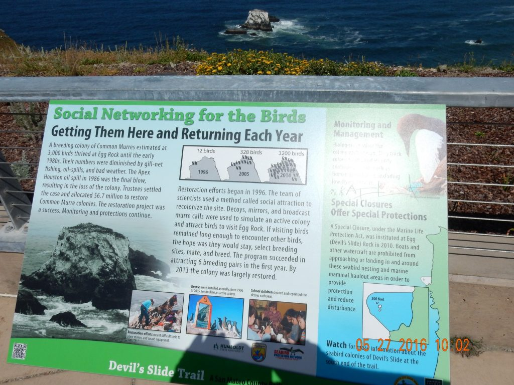 Environmental info on social networking for the Murres