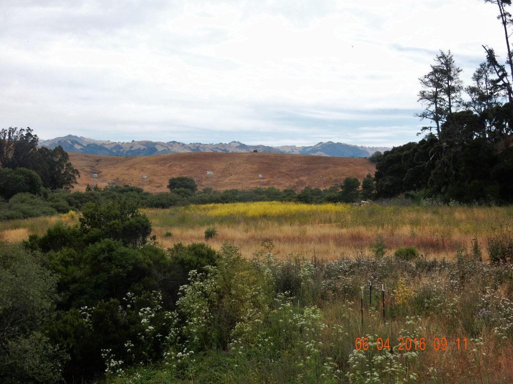 Brown hills outside of Cambria